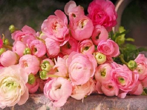 Fleurs CREECE