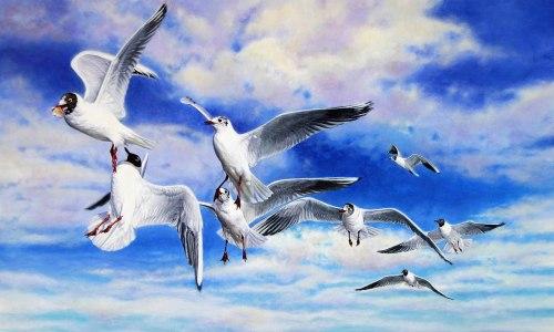 black_headed_gulls_squabbling