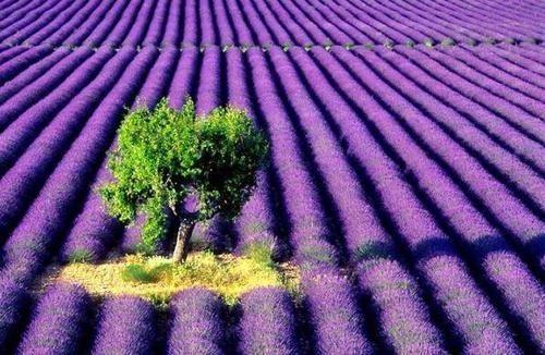 Nature-beauty--nature--landscape--flowers--animals--places--birds--fantasy--scenery_large