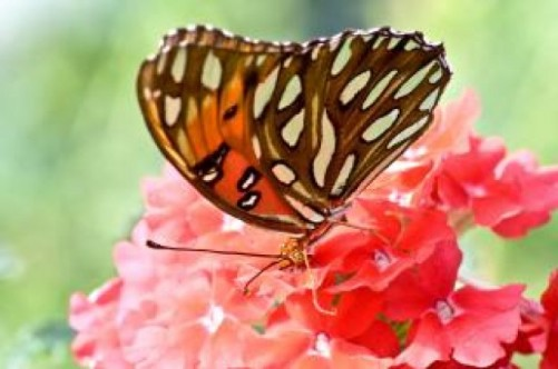 butterflies-and- TA TTRADIA MOY